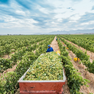 The History Of One Of Robertson's Most Beloved Wine Farms photo