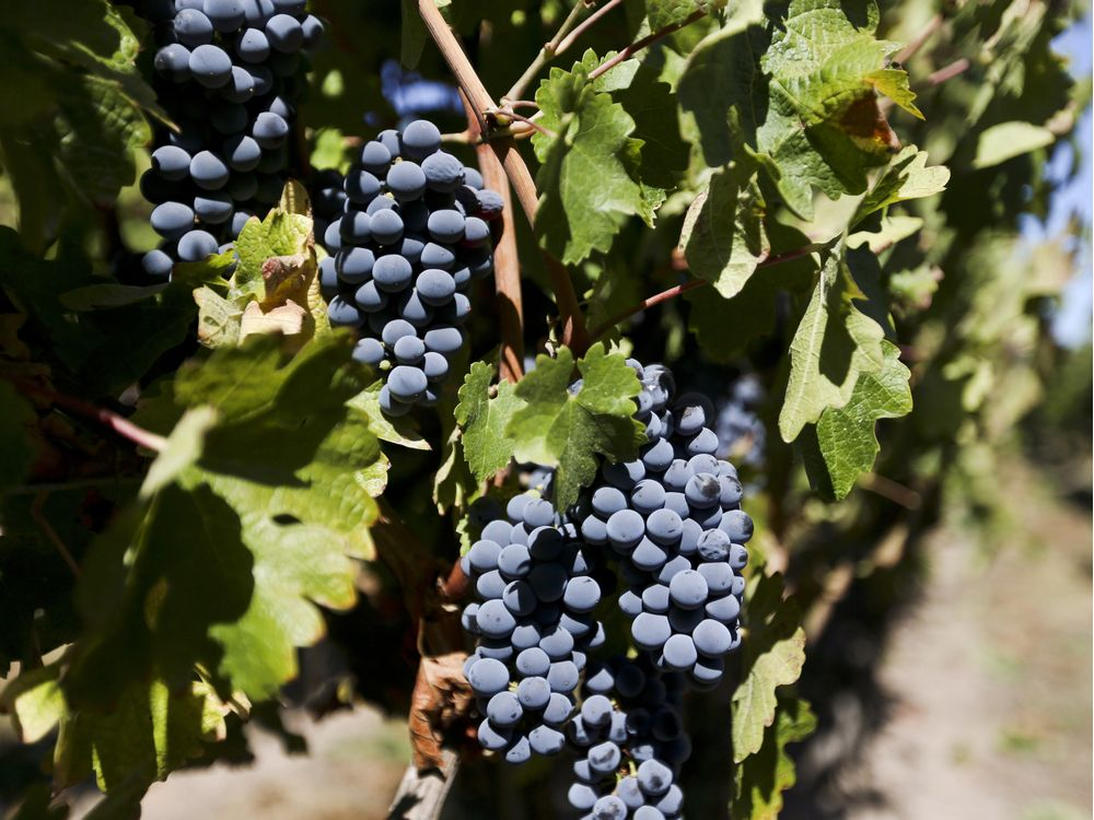 Zacharkiw On Wine: Why Is Chile Still So Underrated? photo