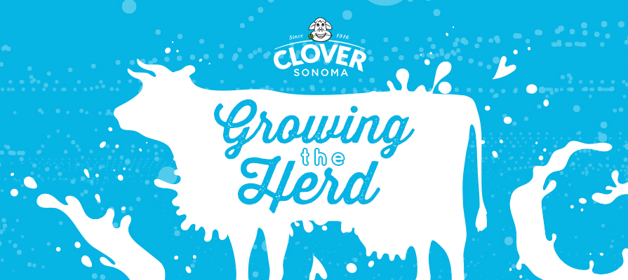 Clover Sonoma Grows Its Herd With New Additions To Its Dairy Product photo