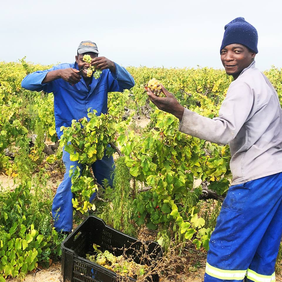 SA Wine In The Time Of Coronavirus: A Case Of Adapt Or Die photo