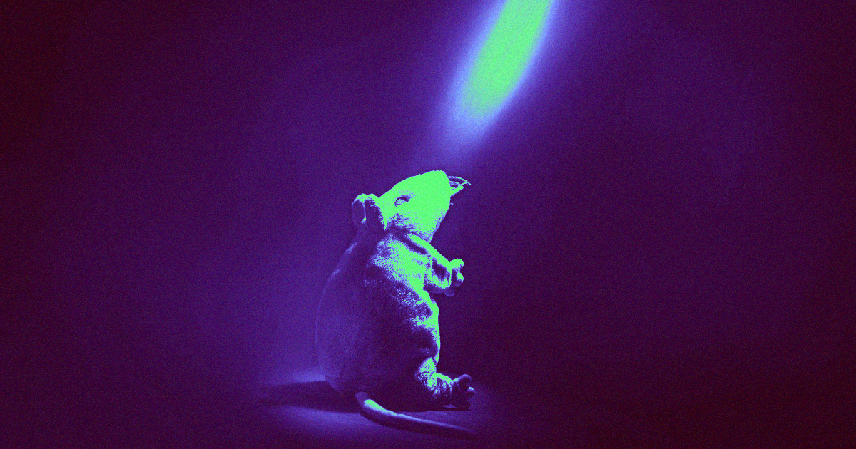 Scientists Reversed Rats Alcoholism By Firing Lasers At Their Brains photo