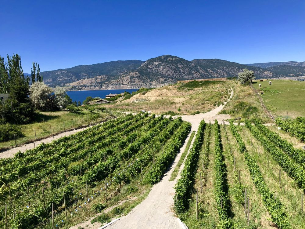 Okanagan Wine Tour: 12 New (and New-ish) Wineries To Visit In 2019 photo
