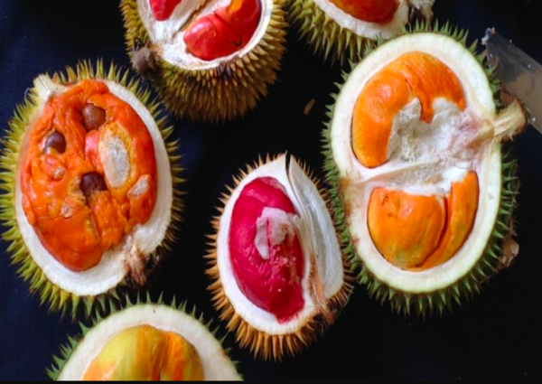 This Durian Collector Has 80 Different Kinds Of Durians On His Farms, photo