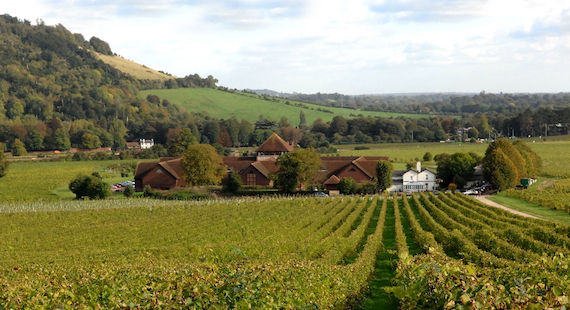 Denbies Wine Estate To Quadruple Production This Year photo