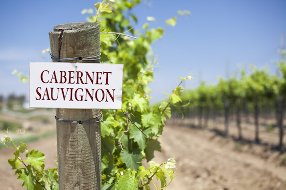 Cabernet Sauvignon Is The Most Planted Grape Variety In The World