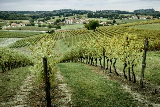 Rémy Martin's Vineyards Being Kept Sustainable For Years To Come photo