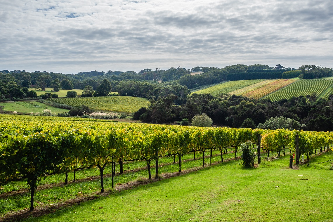 Huge Growth Predicted For Organic Wine photo