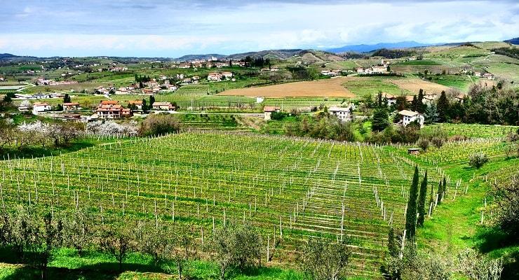 Slovenian Sparkling Wines photo