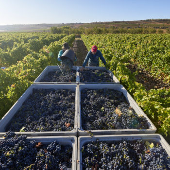 Rioja Confirms 2018 Vintage Classification photo