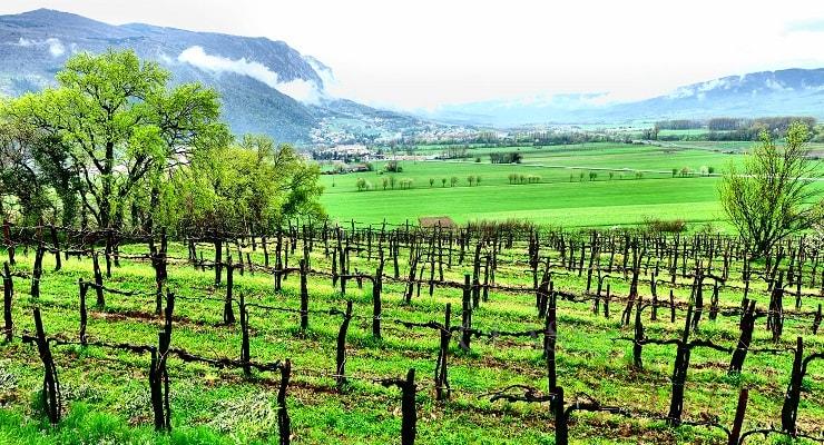 Slovenian Sparking Wines photo
