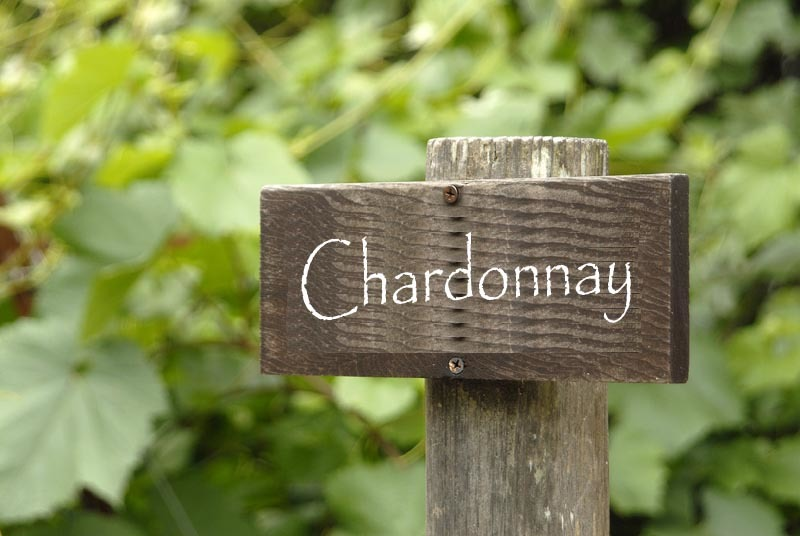 5 Things About Chardonnay You Did Not Know photo
