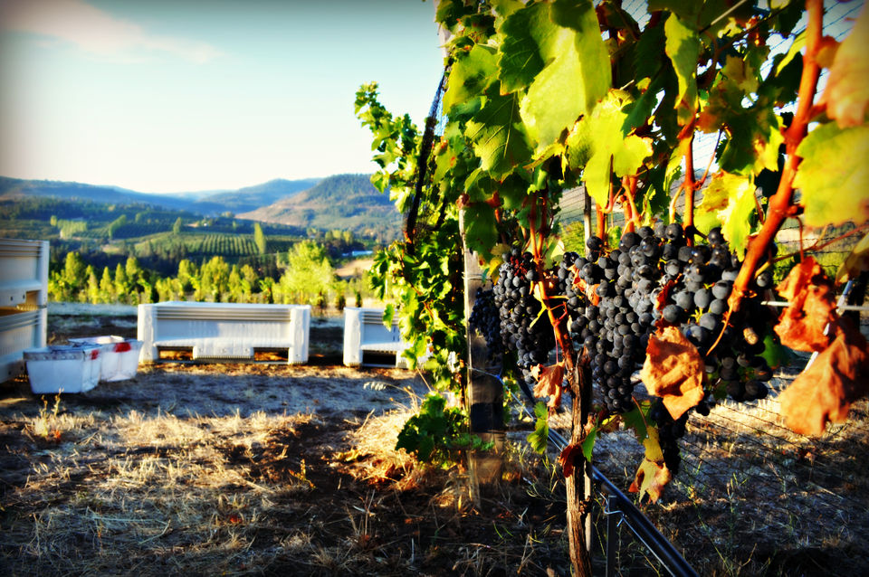 5 Unusual Wines That?ll Be Filling Glasses At Pour Oregon 2019 photo