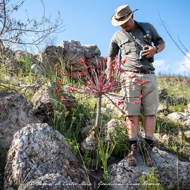 Gondwana Game Reserve Launches A Hands-on Botanical Conservation Experience photo