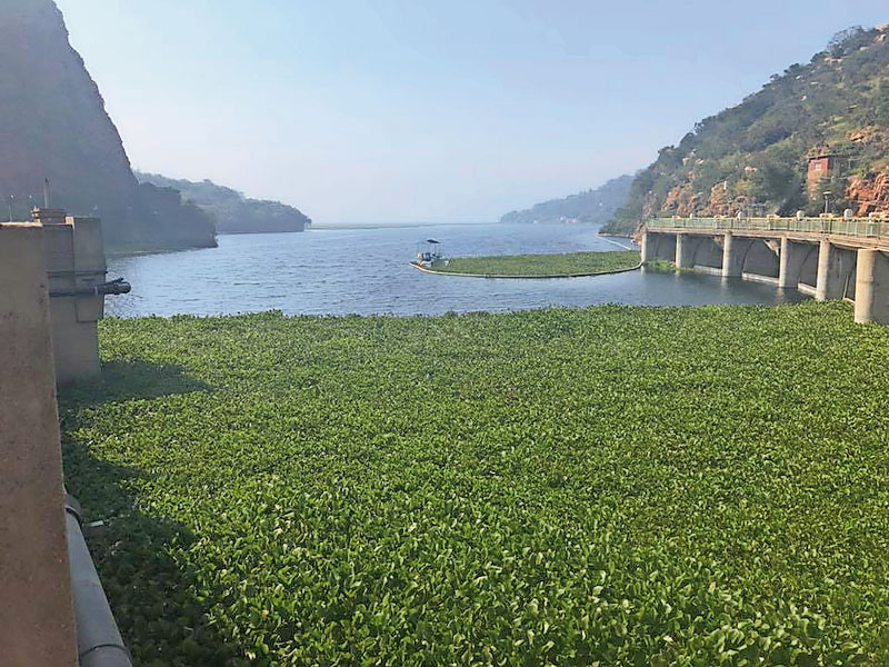 Coca-cola Invests R25 Million Towards Hyacinth Removal photo
