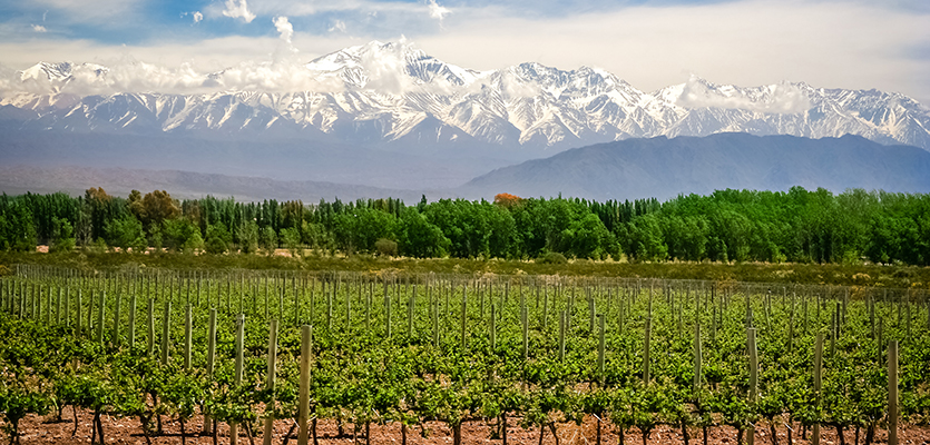 Sex Up Your Malbec Offering With These Three Igs photo