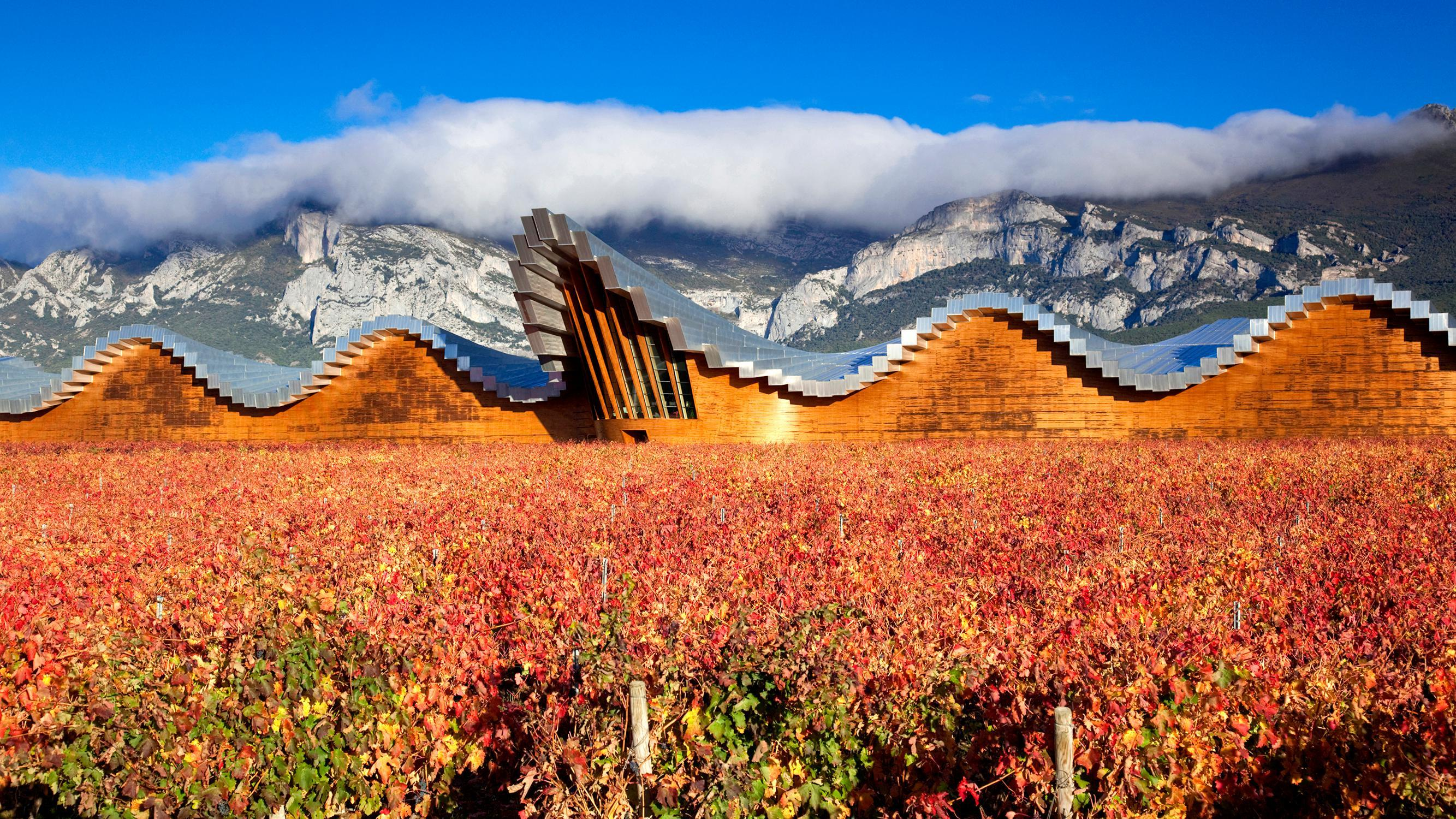 Expert Guide To The Best Wine Holidays, From Bordeaux To Chile photo