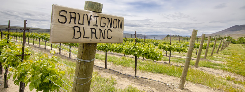 sauvignon blanc white wine guide Types Of Wine and The Best Food Pairing: Your Quick Guide To Pairing Options
