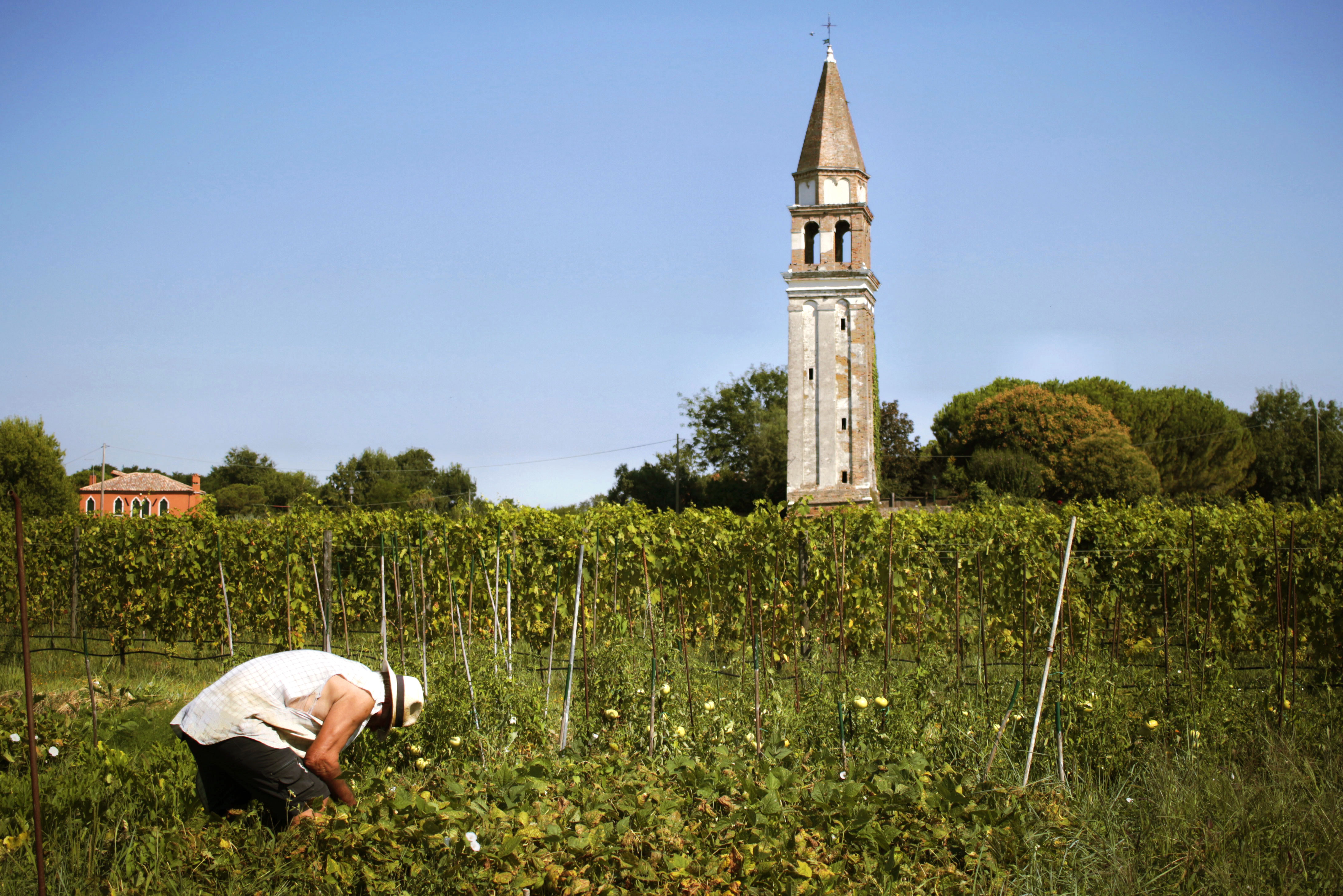 How A Tiny Italian Resort Is Reviving Venetian Viticulture photo