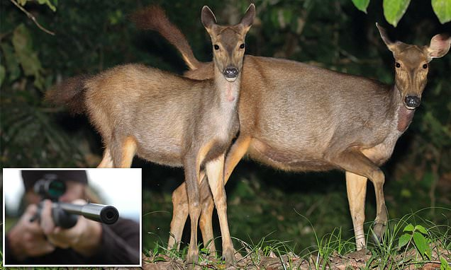 Hundreds Of Wild Deer Will Be Shot By Marksmen In Helicopters photo