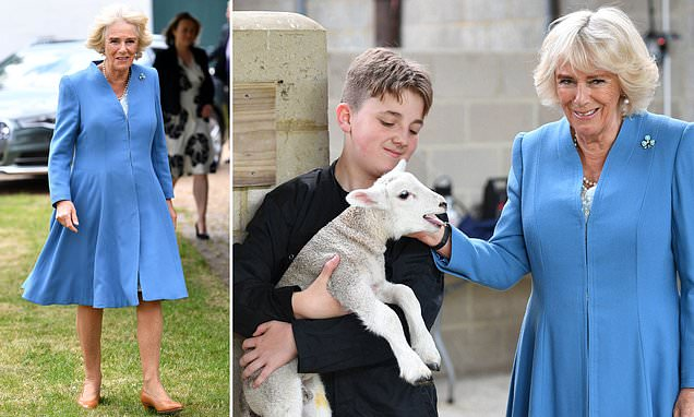 Duchess Of Cornwall Is Elegant In A Blue Dress As She Visits A Farm photo
