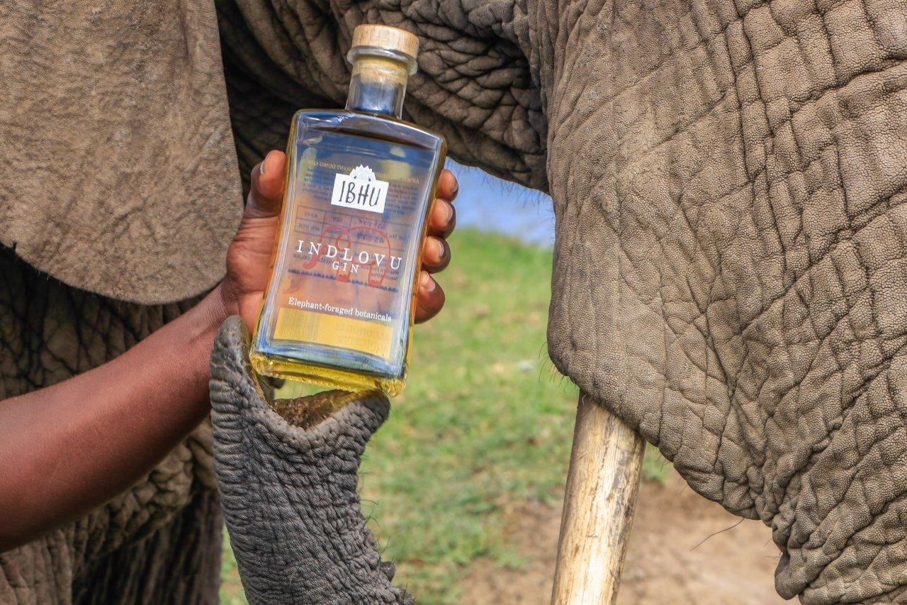 Has Craft Gin Gone Too Far? Here?s One Made From Foraged Elephant Poop photo