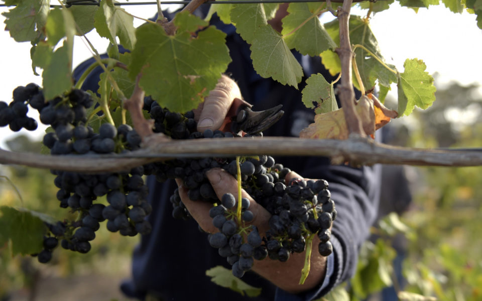 Demand For Australian Wine ?may Outstrip Supply? As Exports Soar photo