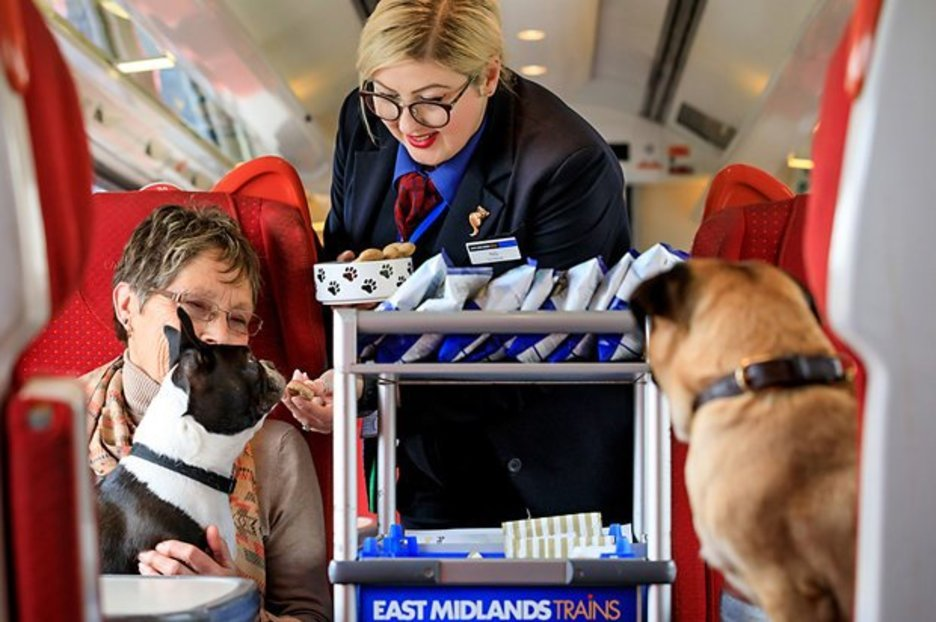 The Beer Festival For Dogs ? And The Pup-friendly Train That Gets Them There photo