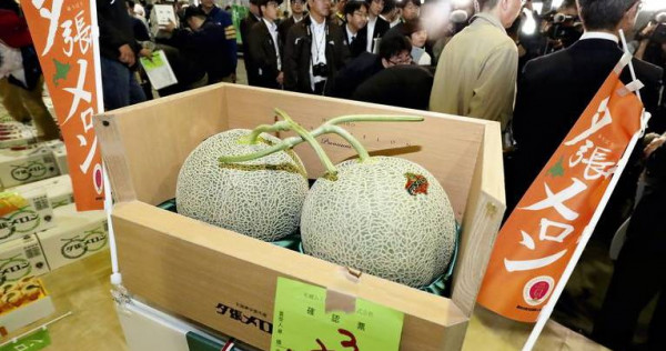 Pair Of Yubari Melons Fetch Record $62,921 At Sapporo Auction, photo