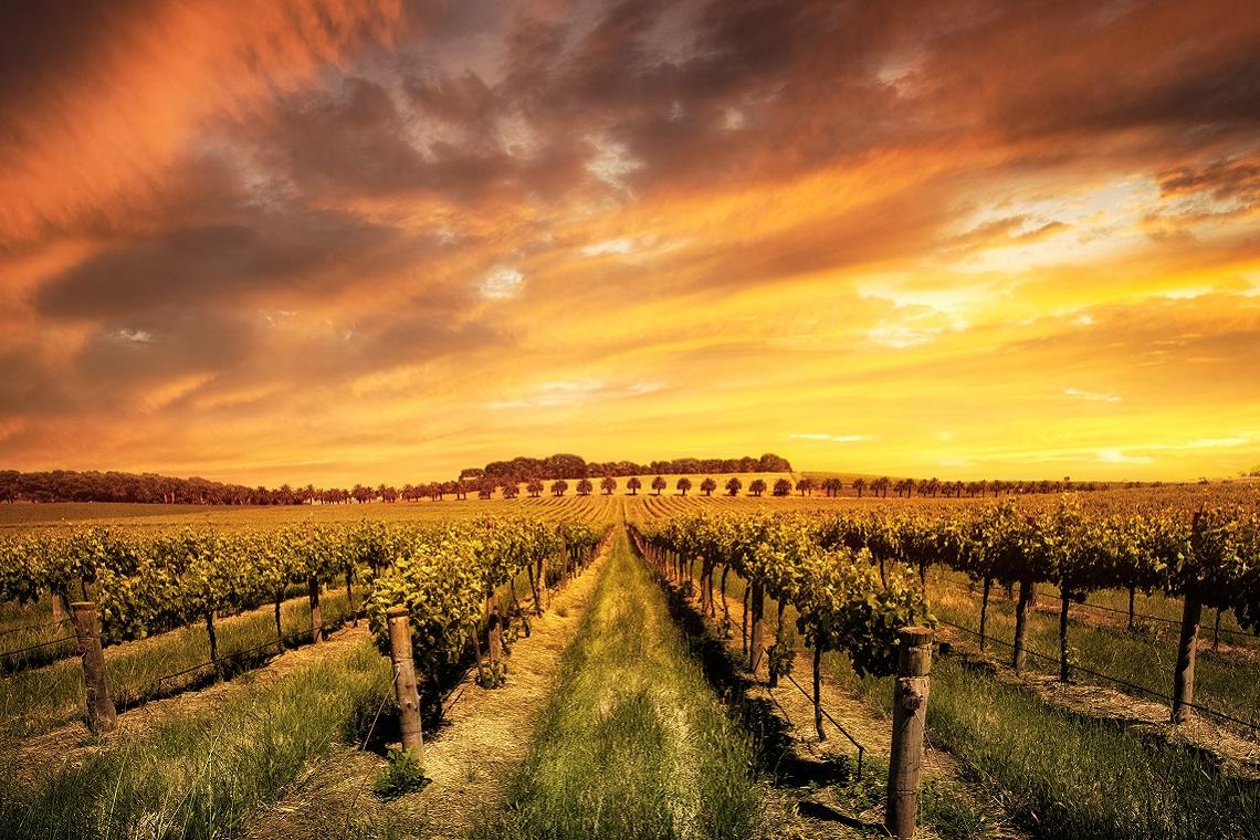 Australian Wine?s Home Ground Advantage photo