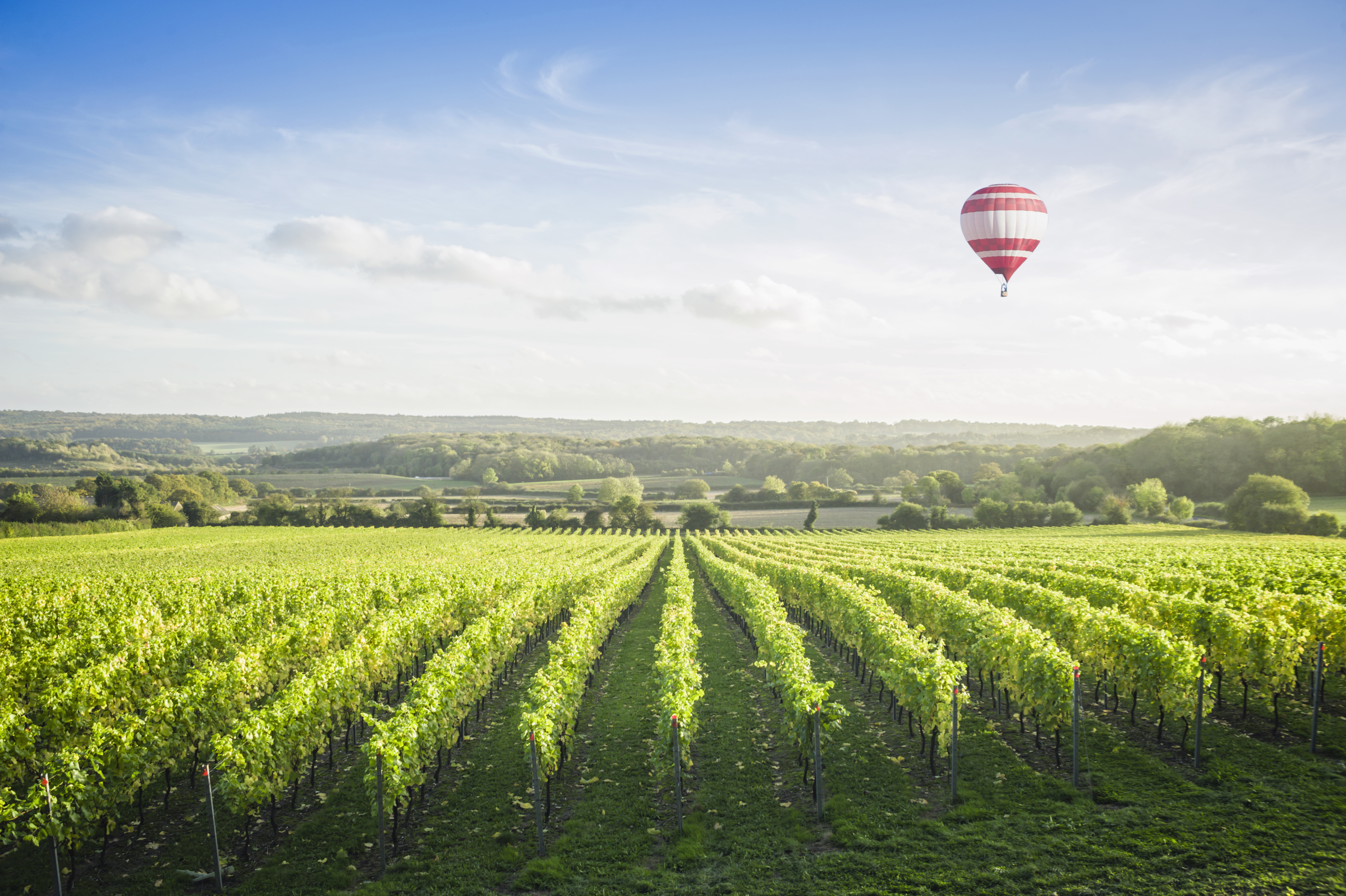 The Best Uk Vineyards For Sampling Some Delicious English Sparkling Wine photo