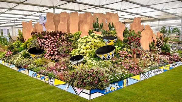 Sanbi Kirstenbosch Takes Gold Once Again At 2019 Chelsea Flower Show photo