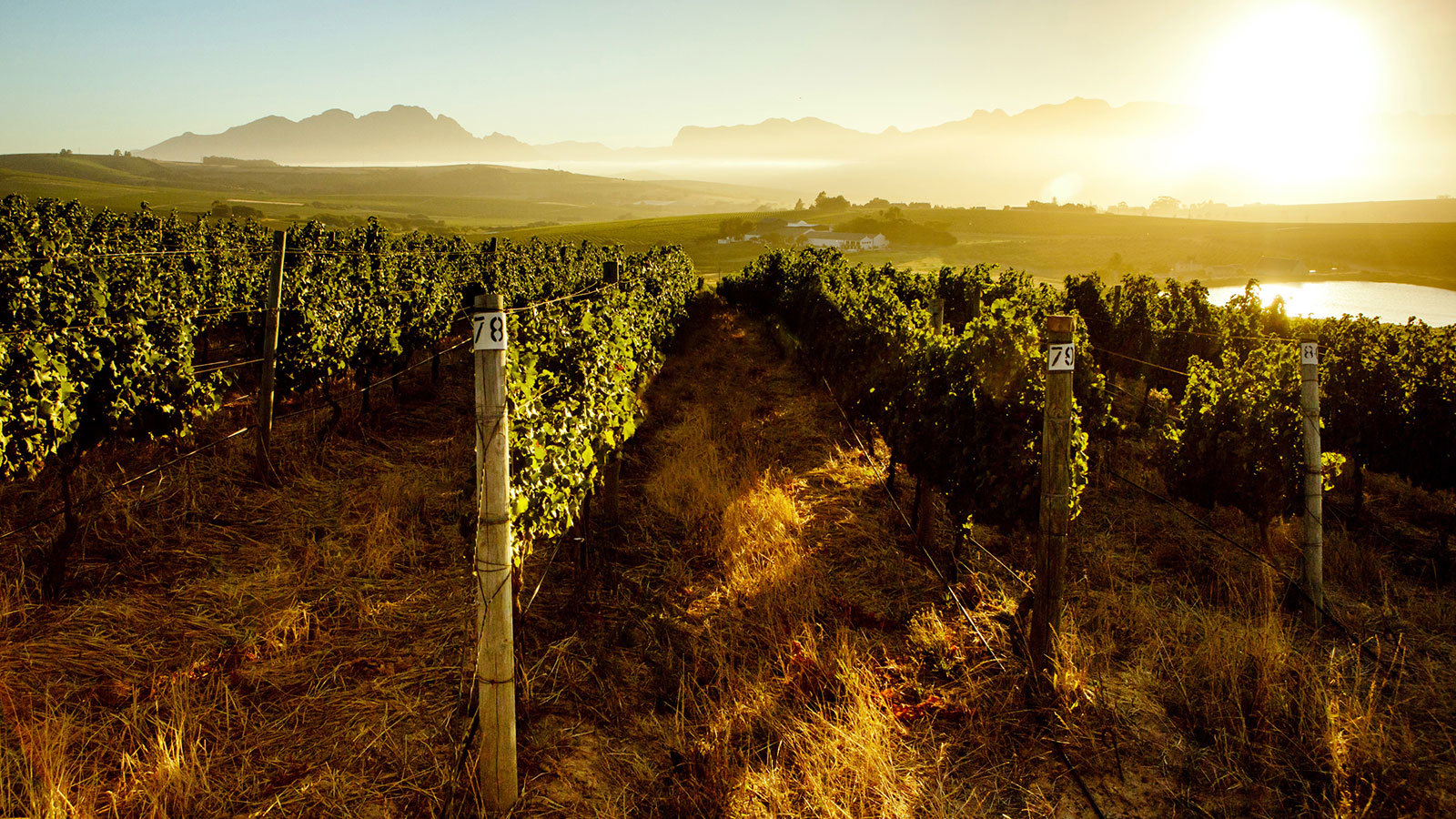 California Winery-investment Firm Buys South Africa's Mulderbosch photo