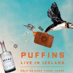 Reyka Launches Adopt-a-puffin Scheme photo