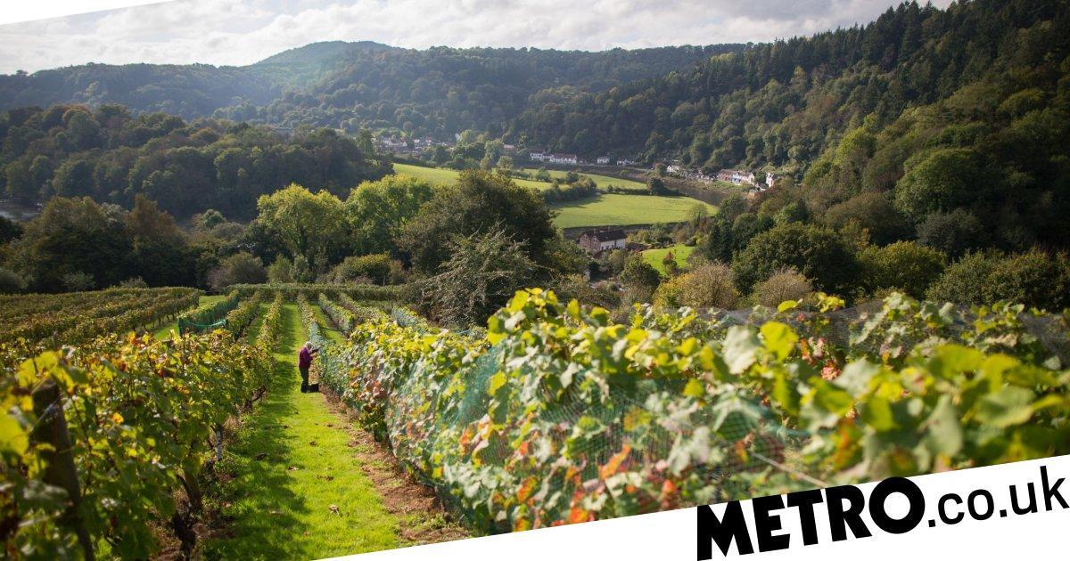 British Wine Industry Is One Of The Fastest Growing In The World photo