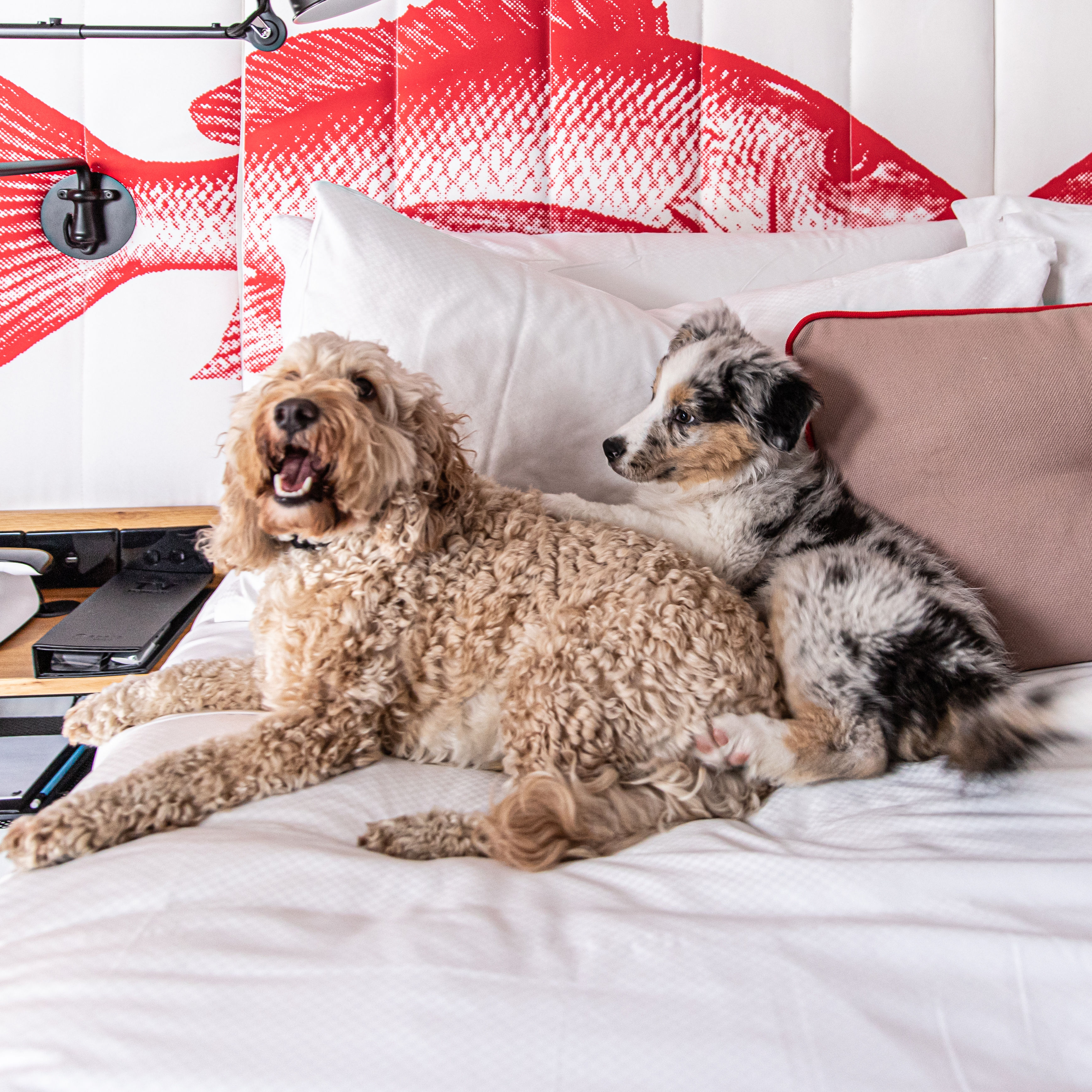 Hotel Wrap: Ovolo's Dog-friendly Rooms, Ihg's New Brand, Pan Pacific's Expansion + More photo