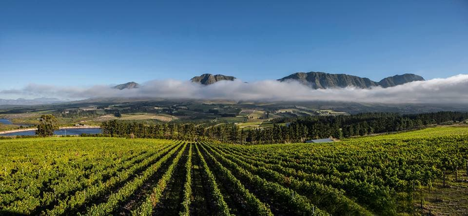 Check Out The Things To Do In Hermanus With Your Friends photo