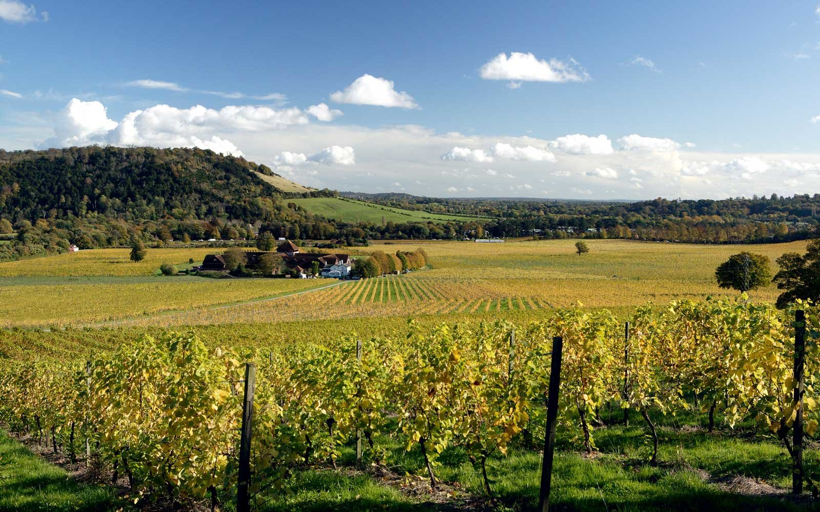 How Britain Is Turning Itself Into Europe's Next Big Wine Destination photo