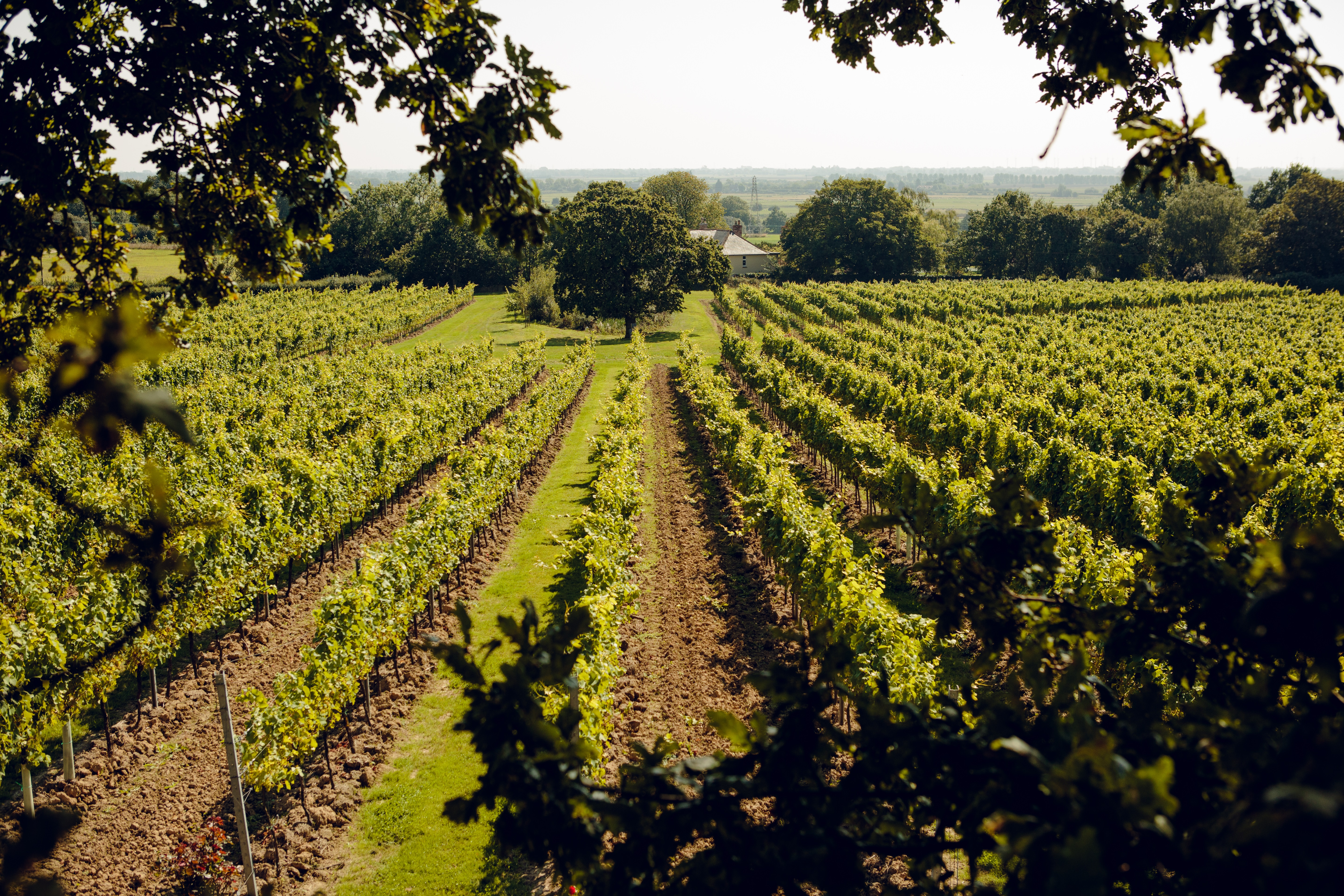 English And Welsh Sparkling Wines Are Sparking A New Wave For Bubbles photo