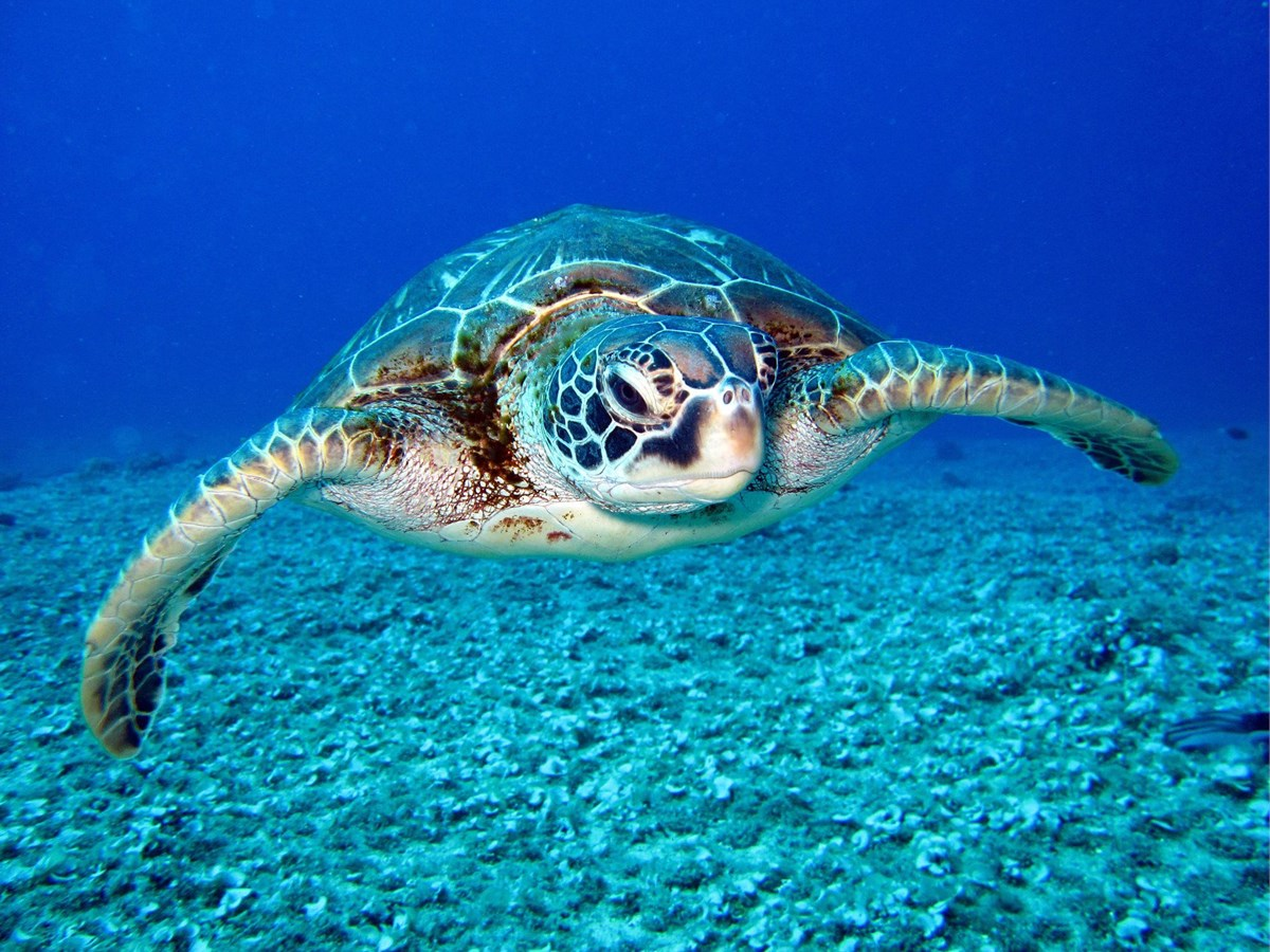 10 Ways To Make Real Changes This World Ocean Day photo