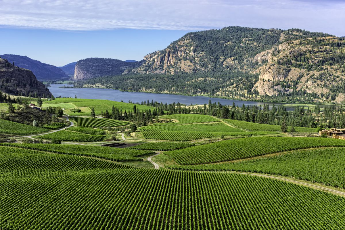 Climate Change And The Okanagan: The Sun Shines Brightly On These 11 B.c. Wines photo