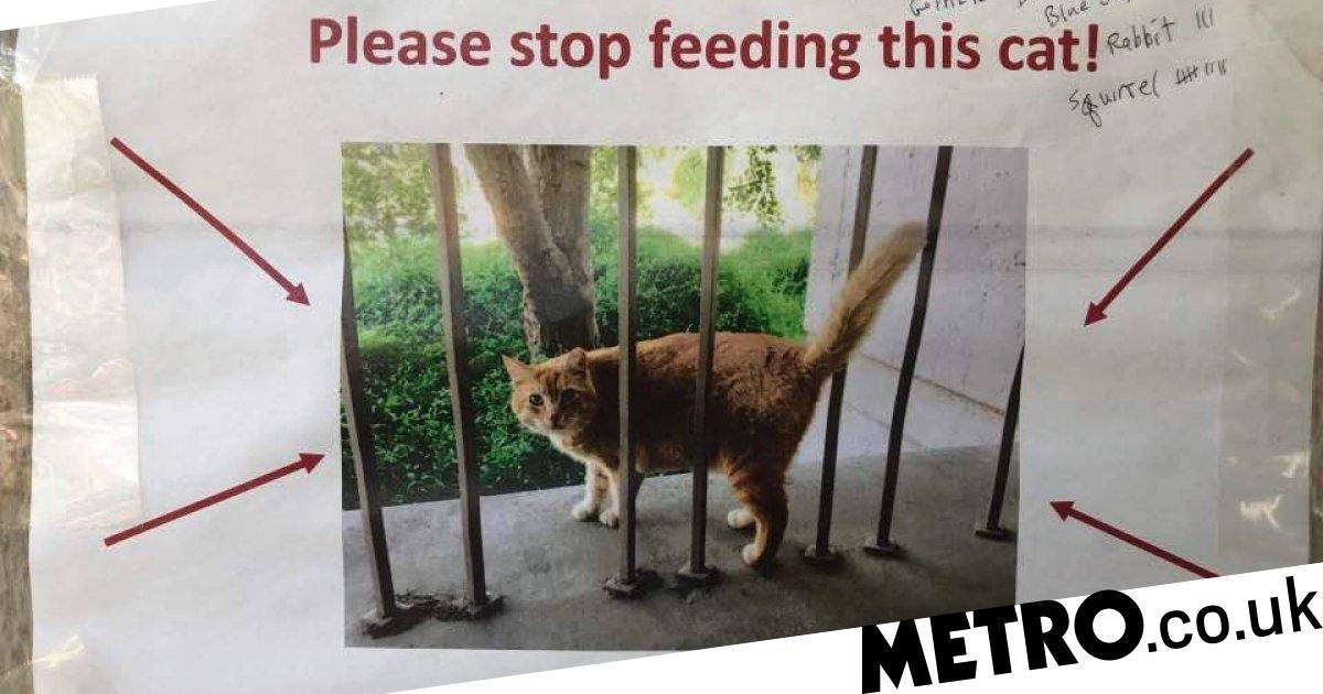 Students Plead For People To Stop Feeding Their University Cat photo