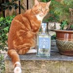 New cat-inspired Gin launched with help of top chef photo