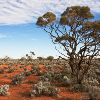 In Focus: How The Australian Wine Industry Is Dealing With Climate Change photo