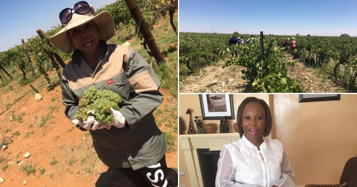Female Farmer Takes Neglected Vineyard, Makes It Successful Business photo