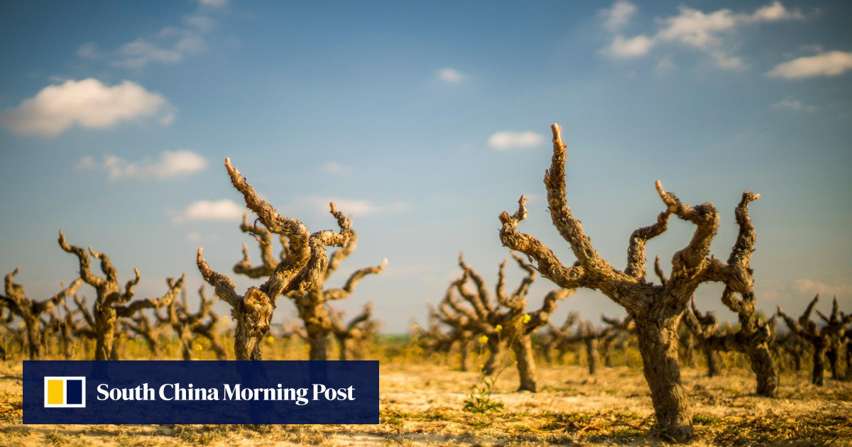 Wine Vs Climate Change: How Global Warming Is Affecting The Grapes Vineyards Grow photo