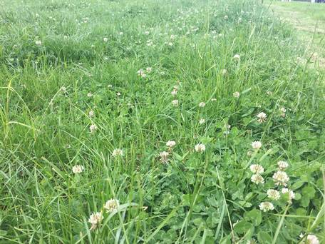 How To Get The Ideal Clover Cover Into Your Fields photo