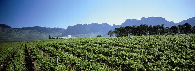 Look: Inside The Best Wine Estate In Africa photo