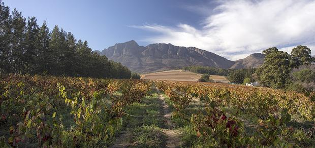 Venture Into The Winelands This Winter photo