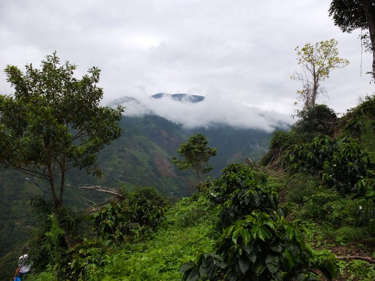 Colombia?s Federation Of Coffee Growers Calls For $2 Minimum Price photo