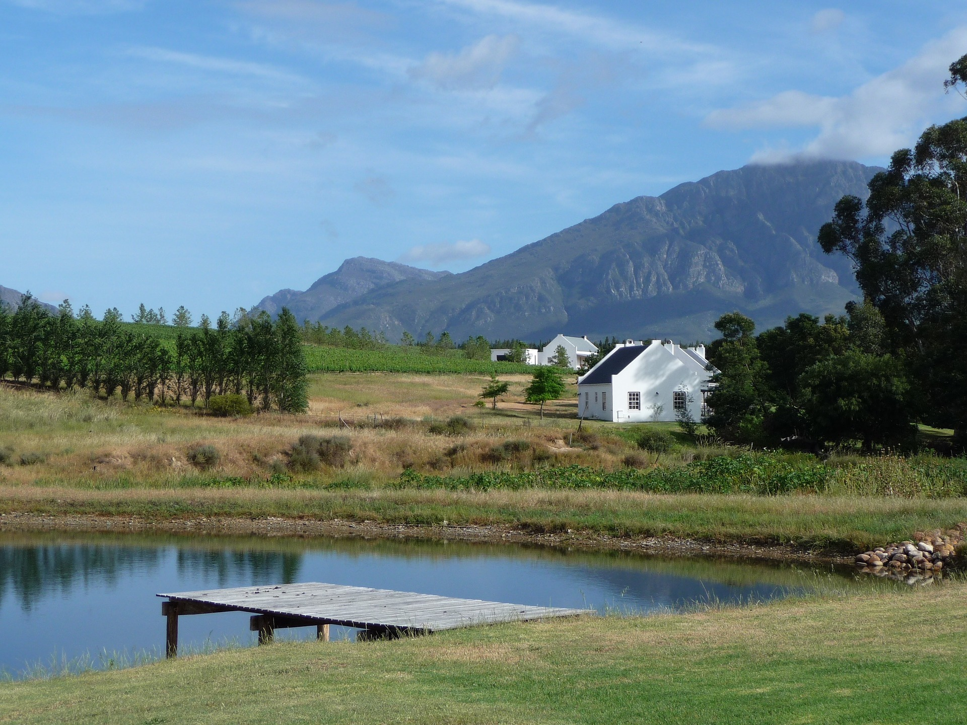 What Makes The Cape Wine Region The Most Unique In The World? photo